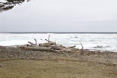 driftwood arkivbild