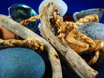 Driftwood e escudos Fotos de Stock