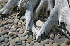 Driftwood e pedras imagens de stock