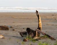 Driftwood em uma praia fotografia de stock royalty free