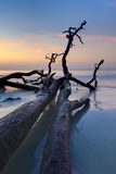 Driftwood en el Atlántico, hdr fotos de archivo