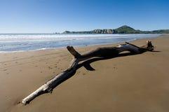 Driftwood en la bahía de Tolaga Foto de archivo