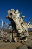 Driftwood en la isla abandonada Fotos de archivo libres de regalías