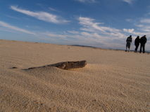 Driftwood en la playa Imagenes de archivo