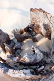 Driftwood en la playa Imagen de archivo libre de regalías