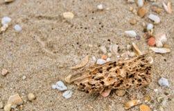 Driftwood en la playa Fotos de archivo libres de regalías