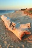 Driftwood en la playa imágenes de archivo libres de regalías