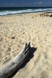 Driftwood en la playa Foto de archivo
