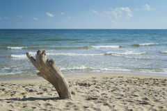 Driftwood en la playa Fotos de archivo