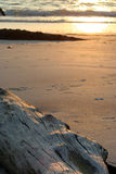 Driftwood en la playa imagen de archivo