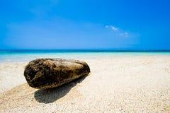 Driftwood en la playa carribcean Imagen de archivo libre de regalías