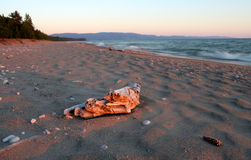 Driftwood en superior de lago Imágenes de archivo libres de regalías