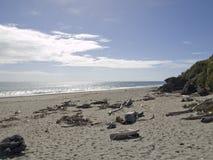 Driftwood en una playa imágenes de archivo libres de regalías