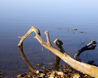 Driftwood Fingers Royalty Free Stock Photography
