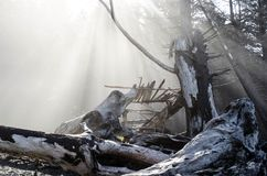 Driftwood on a foggy morning. Rialto Beach, Olympic National Park, Washington, USA Stock Images
