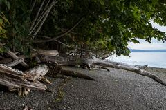 Driftwood and forest edge over stone covered beach. Driftwood and forest edge with a stone and shell covered beach in the Pacific Northwest Stock Image