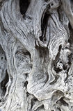Driftwood grain and knot texture. Close up of driftwood grain and knot texture royalty free stock image
