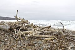 driftwood royaltyfri foto