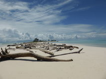 Driftwood on Helens Reef Micronesia Stock Photos