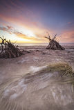 Driftwood hides on St Cyrus Coast in Scotland. Stock Images