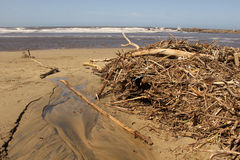 Driftwood after High Tide Storm Royalty Free Stock Images