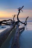 Driftwood i det atlantiskt, hdr arkivfoton