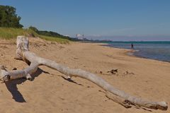 Driftwood on the Indiana Dunes State Park Beach stock image