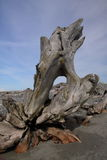 Driftwood. An interesting piece of driftwood is perched on the beach Royalty Free Stock Photos