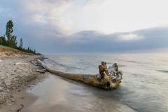 Driftwood on a Lake Huron Beach Stock Photography