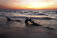 Driftwood on Lake Huron Beach at Sunset Stock Image
