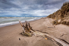 Driftwood on a Lake Huron Beach Under a Cloudy Sky Royalty Free Stock Photo