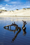 Driftwood in lake. With sandbank behind Royalty Free Stock Photo