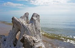 Lake Michigan behind driftwood close-up stock photos