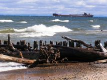 Driftwood on Lake Superior Royalty Free Stock Photography