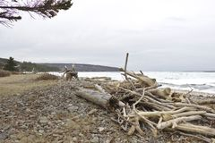Driftwood and Ice  royalty free stock image