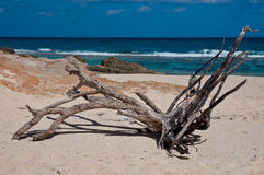 Driftwood Stock Photography