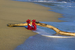Driftwood and Lei Stock Image