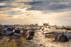 Driftwood Littered Beach. Driftwood litter the beach of Nehalem Bay under stormy skies Royalty Free Stock Photography