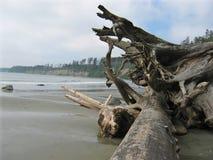 Driftwood a lo largo de la costa Foto de archivo libre de regalías