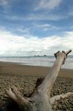 Driftwood log on beach. With Cloudy Sky royalty free stock photos