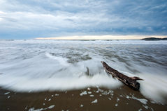 A driftwood log on a beach at dawn Stock Photo