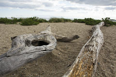 Driftwood log on a beach at the ocean in Connecticut. Stock Photo