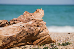 Driftwood log on the beach Royalty Free Stock Photo