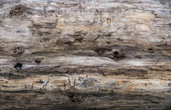 Driftwood Log Closeup Background royalty free stock photos