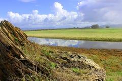 Driftwood log in an estuary. Overgrown driftwood log in an estuary reserve Royalty Free Stock Photo