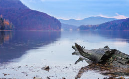 Driftwood Log Floating  in a Lake Royalty Free Stock Photo