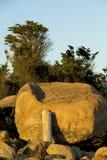 Driftwood log leaning on glacial boulder, Hammonasset Beach, Con Royalty Free Stock Photos