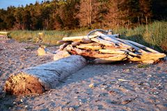 Driftwood and Log on Sandy Beach Royalty Free Stock Image
