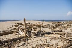 Driftwood log on sea coast. Sunny summer day. Latvia. River called Gauja royalty free stock images