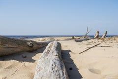 Driftwood log on sea coast. Sunny summer day. Latvia. River called Gauja stock photo